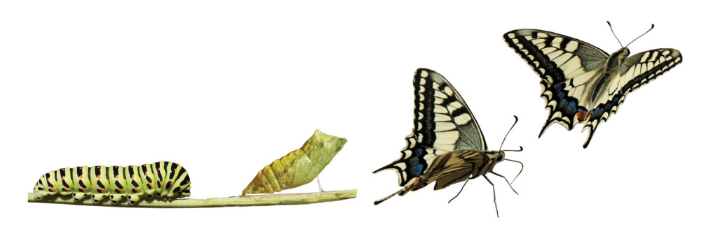 caterpillar-to-butterfly-change-metamorphosis